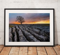 Beautiful photo of a Lone tree at Malham on the limestone pavement during sunset in the Yorkshire Dales. England