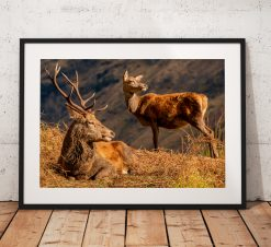 Northern Wild Landscape Photography - Stag Deer and Doe Glen Etive, Scottish Highlands, Wildlife Scotland