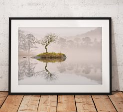 Beautiful calm misty lone tree landscape photograph taken on Rydal Water, Lake District, England. Wall Art