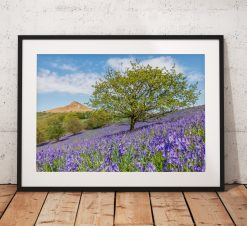 Bluebell tree landscape Photography. wildflowers, Spring,  Tree, North York Moors, England. Landscape Photography. Mounted print. Wall Art.