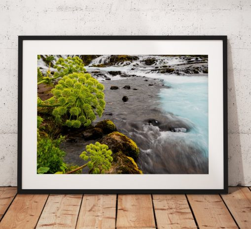 Wildflowers along the banks of the beautiful Brúarfoss Waterfall in Iceland.