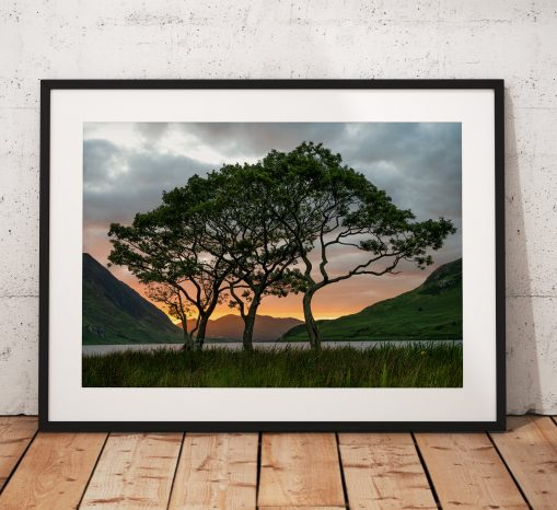 Lake District Landscape Photography showing a  group of trees during a sunset  on Crummock Water. UK