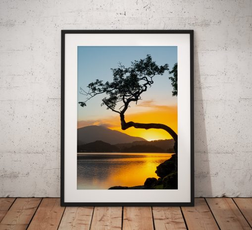 Lake District Landscape Photography showing a sunrise at a lone tree at Otterbield Bay on Derwentwater, Lake District UK. Wall Art print