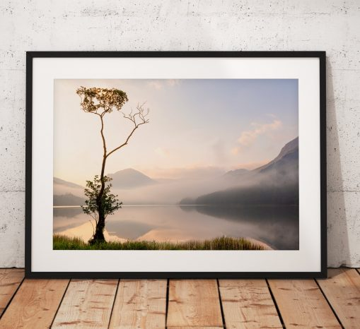 Northern Wild landscape Photography - Lone tree on Buttermere during a very atmospheric misty morning, Lake District UK