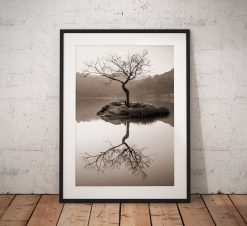 Northern Wild Landscape Photography - Lone Tree Landscape Photography taken on a misty morning at Rydal Lake District, England. Wall Art