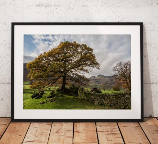 Mountain Photography, Great Langdales, Autumn, Tree, Stonewall, Lake District, view, boulders,Nature, England. Landscape Photo.