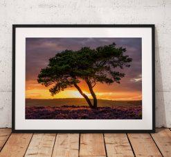 Nature Photography, North York Moors, Summer, Sunset. Egton, lone Tree,  Heather, England. Landscape Photo. Mounted print. Wall Art.
