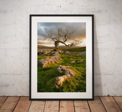 Photograph of a dramatic Lone tree on Limestone pavement showing the warm sunrise glow in the Yorkshire Dales. England, Fine Art, Home Decor