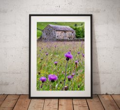 Purple Wild Flower Meadow